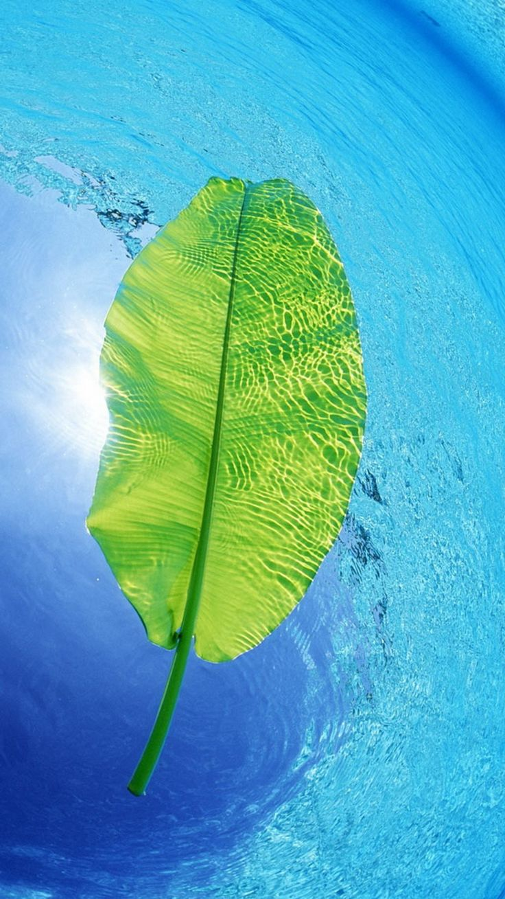 Blue Water Green Leaf iPhone 6 Wallpaper | iPhone ...