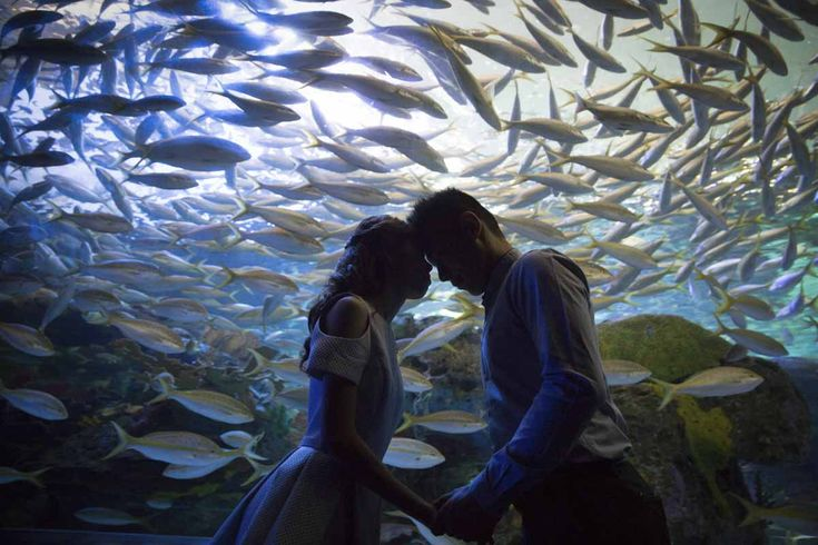 Creative engagement photography idea. Ripley's Aquarium of Canada is a wonderful place for unique photoshoots like this!  ~ http://www.focusphotography.ca/portfolio_page/toronto-ripleys-aquarium-engagement-session-ivy-and-june/