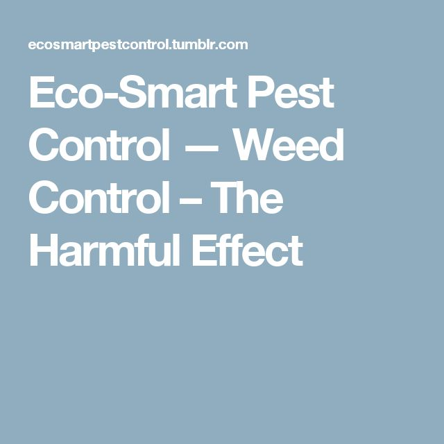 Eco-Smart Pest Control — Weed Control – The Harmful Effect