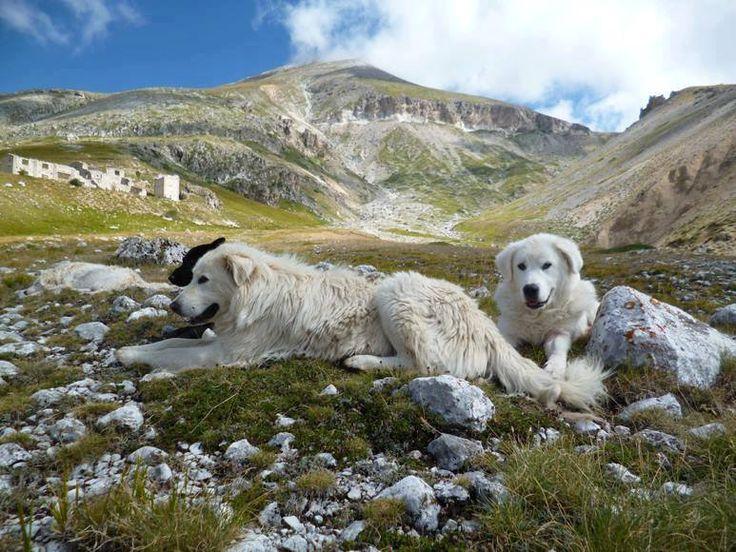 Buongiorno e buon week-end amici dell'Abruzzo Segreto la bella stagione è inziata! Con questo bellissimo scatto di Maria Di Pietro vogliamo ricordare il ruolo del Pastore Abruzzese che in questi giorni comincia a lavorare sulle nostre montagne a proteggere i greggi...per noi è simbolo di forza e coraggio ma anche di tenerezza e protezione! #Abruzzo #travel #Italy #CampoImperatore #wildlife #PastoreAbruzzese #transumanza #AbruzzoSegreto #SecretOfAbruzzo