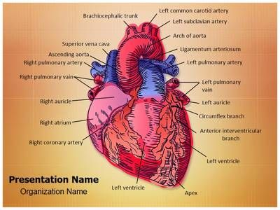 Cardiac Blood Vessels PowerPoint Presentation Template is one of the best Medical PowerPoint templates by EditableTemplates.com. #EditableTemplates #Pump #Health #Model #Trunk #Pulse #Section #Anatomy #Life #Cardiac Blood Vessels #Cardiology #Physical #Coronary #Ventricle #Heartbeat #Science #Healthy #Healthcare #Cava #Heart #Human #Artery #Biology #Circulation #Aorta #Vessel #Part #Illustration #Test #Scalable #Diagram #Drawing #Care #Attack #Medicine #Flow #Cardiac #Symbol #Body…