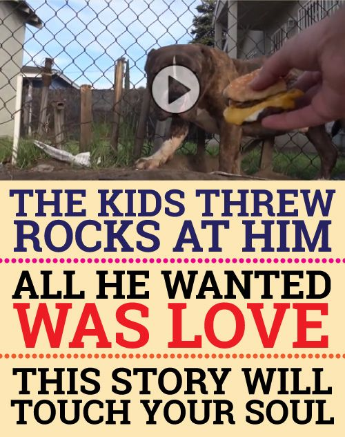 Such a moving story! Oh my goodness I cried so much... What a beautiful story I would so adopt if possible...