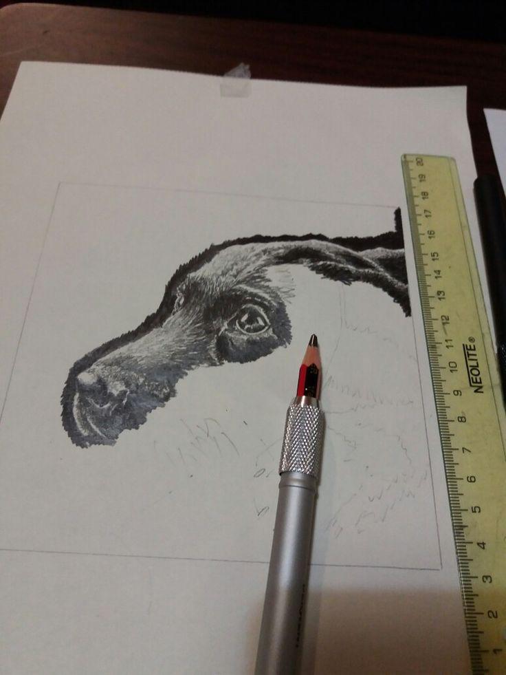 Cachorro proceso