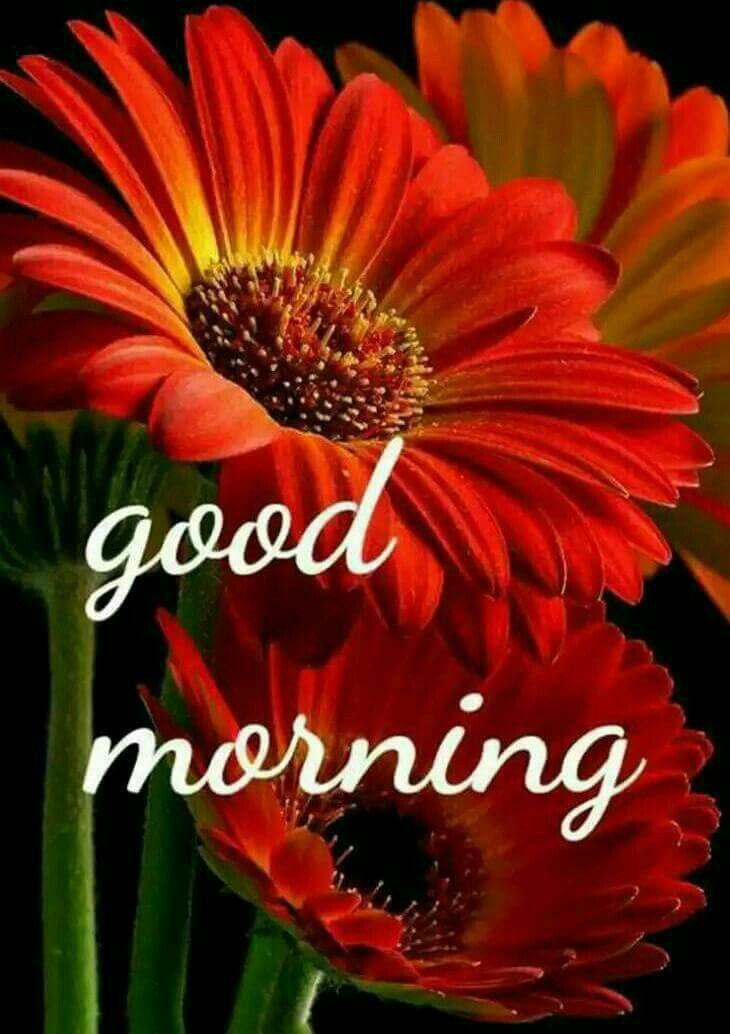 Beautiful Flowers Good Morning Greetings Good Morning Images Happy Weekend Images