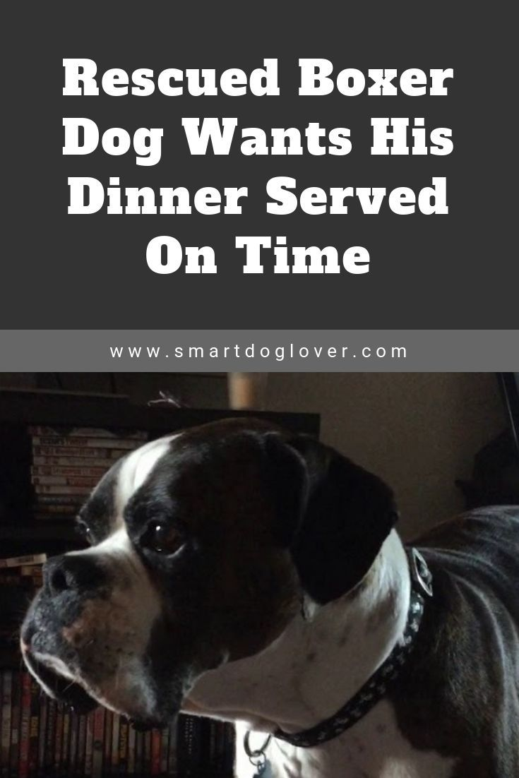 Pin By Eat Play Easy On Animal Dog Stories In 2020 Boxer Dogs
