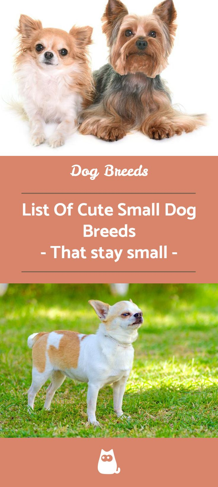 13 Small Dog Breeds List With Pictures With Images Cute Dogs Breeds Dog Breeds List Cutest Small Dog Breeds
