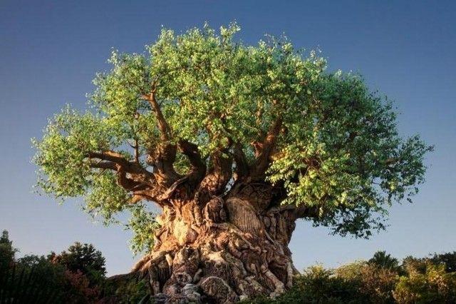 Притча о древе исполнения желаний 0
