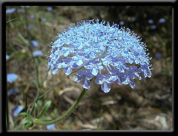 Summer - Perth Hills - Wildflowers of Western Australia