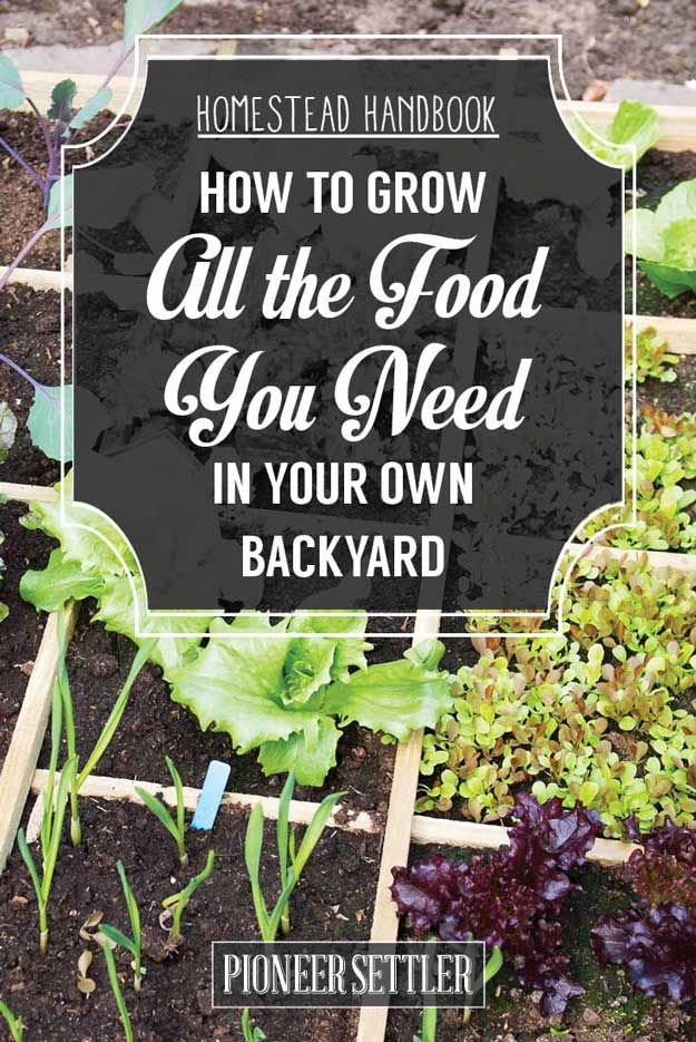 How to Grow All The Food You Need In Your Backyard – Homestead Handbook | Gardening and Self-Sufficiency Ideas by Pioneer Settler at http://pioneersettler.com/homestead-handbook-grow-all-the-food-you-need-in-your-backyard/