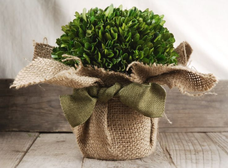 Boxwood and Ivy - Garlands, Stems, Vines, Plants