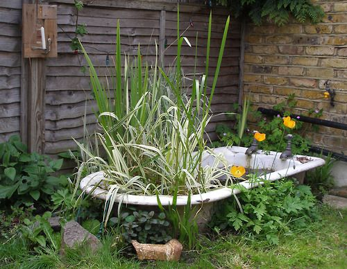 The tub only cost 1 £  off eBay. The taps provide a waterfall that filters the pond, and if Basil [her cat] didn't eat so many of the frogs, this would be home to an army of slug-slaying allies.