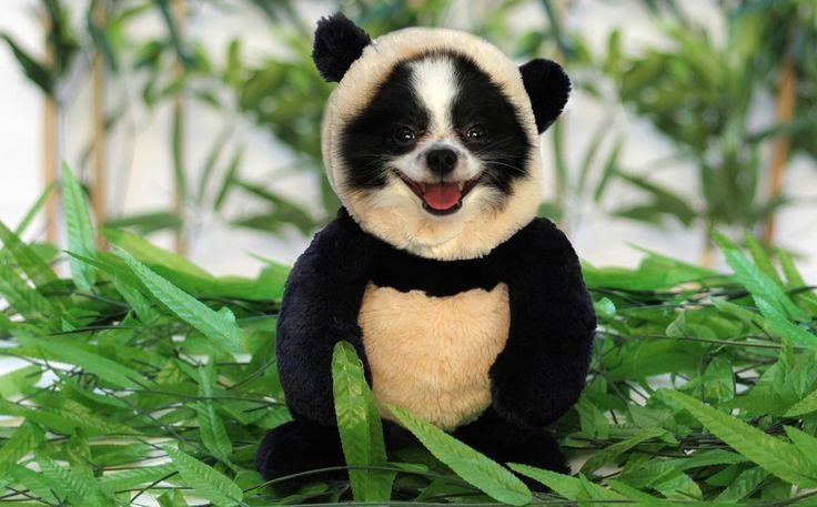 Panda Dog Costume -- Reservations
