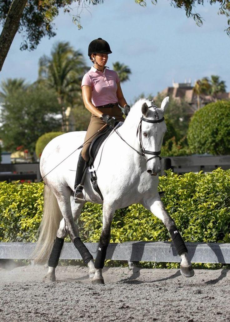 3499 best images about Equine: Horsemanship & Training on ...