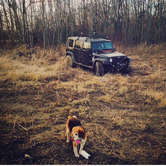 Ruby and jeep off-road Alberta Camrose.