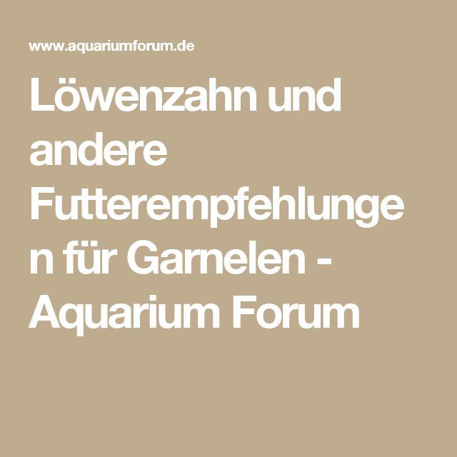 Löwenzahn und andere Futterempfehlungen für Garnelen - Aquarium Forum