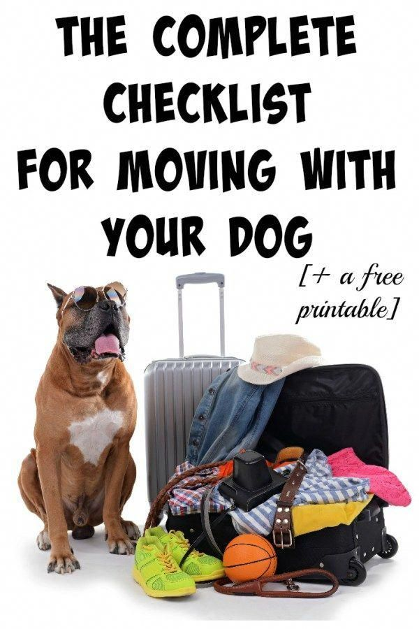 Basic Dog Training Instructions Dogtrainingtoronto Moving With