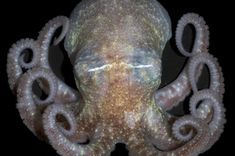 8 Crazy Facts About Octopuses | LiveScience