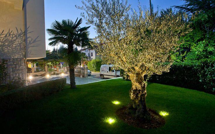 un albero illuminato con faretti led