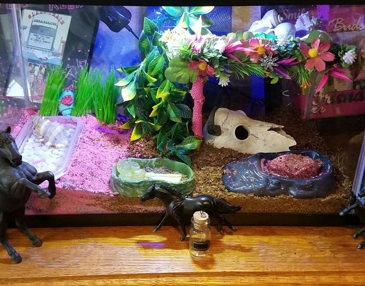 Hermit crab tank pink girly