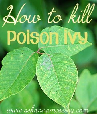 HOW TO KILL POISON IVY  1 gallon white vinegar with 1 cup salt and 2 TBSP blue dawn dish soap.  * Once all the ingredients have been mixed well pour mixture into a spray bottle.  * Spray poison ivy.  Be careful not to get it on your other plants because this mixture will kill anything you spray it on!