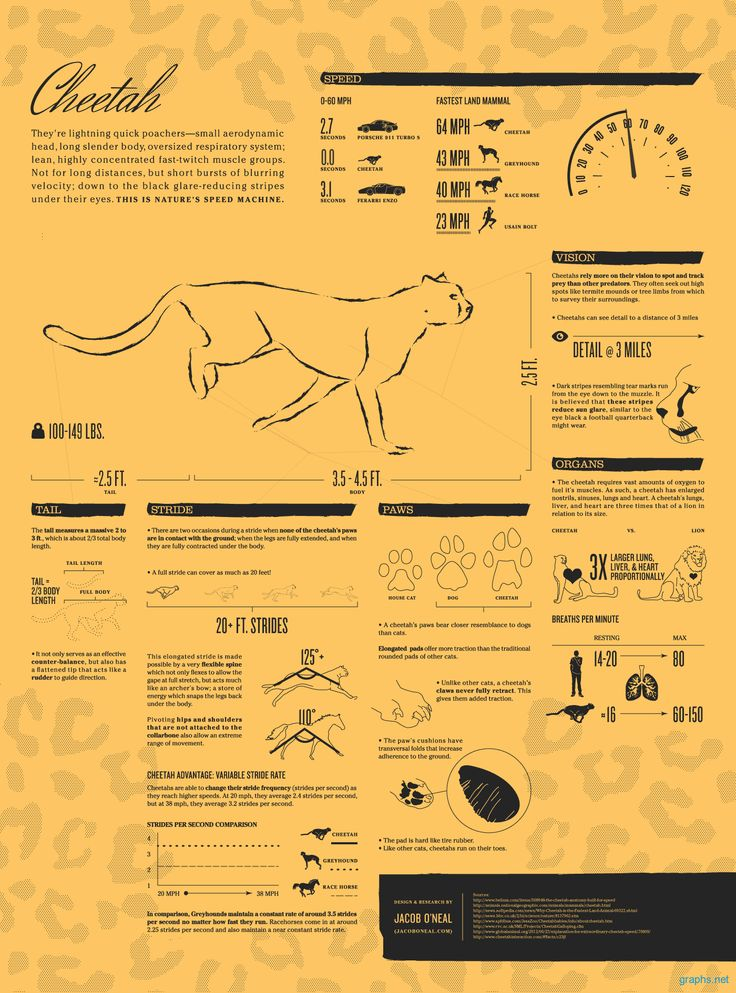 Interesting # Facts About # Cheetah