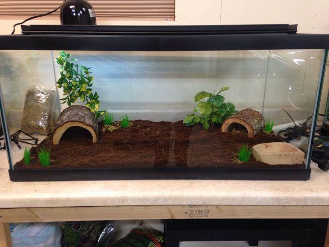 How to Create a Corn Snake Vivarium: 13 Steps