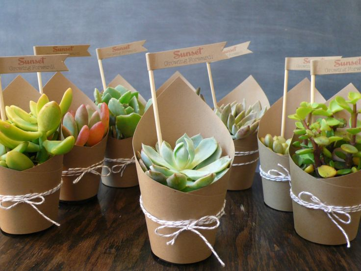 paper wrapped potted succulent plants wedding gifts