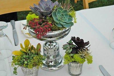 You know how I love succulents in old silver.  Succulents: How Far Can You Go? | Laguna Dirt: Gardening Succulents, Landscaping Ideas, Floral Ideas, Beautiful Succulents, Succulent Ideas, Cool Ideas, Container Gardens Succulents