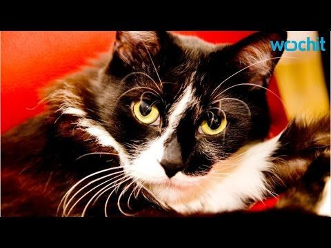 CDC Says Cat-Scratch Disease Is Becoming Deadly - YouTube