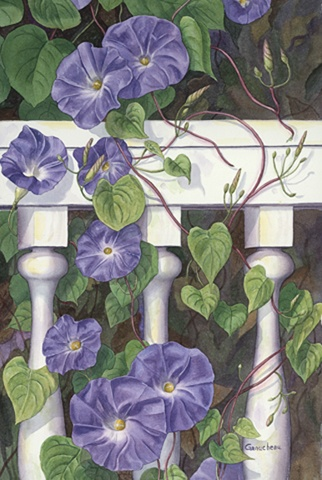 Morning Glories - I love them. That's why I call my home Morning Glory Dacha!