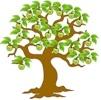 Appelboom - appelbloesem