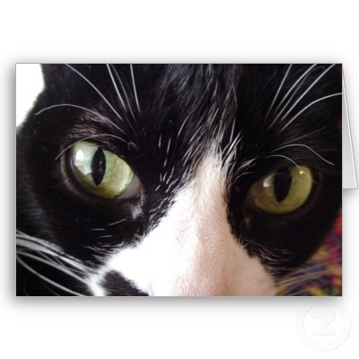 black and white cat - Google Search Pandy