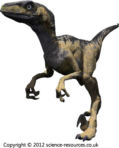 Deinonychus (Terrible Claw) Deinonychus was a small meat-eating dinosaur that lived during the Cretaceous period.