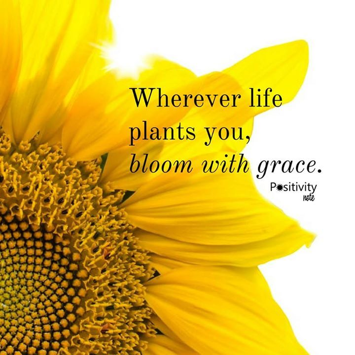 Wherever life plants you bloom with grace. #positivitynote