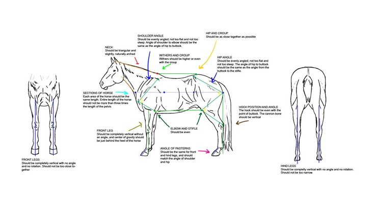 1000  images about horse