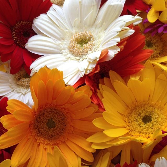 : Gerbera Daisies, Mixed Flower, Gardens Paths, Gerbera Daisy, Random Favorit, Favorit Flower, Flower Power, Beauty Things