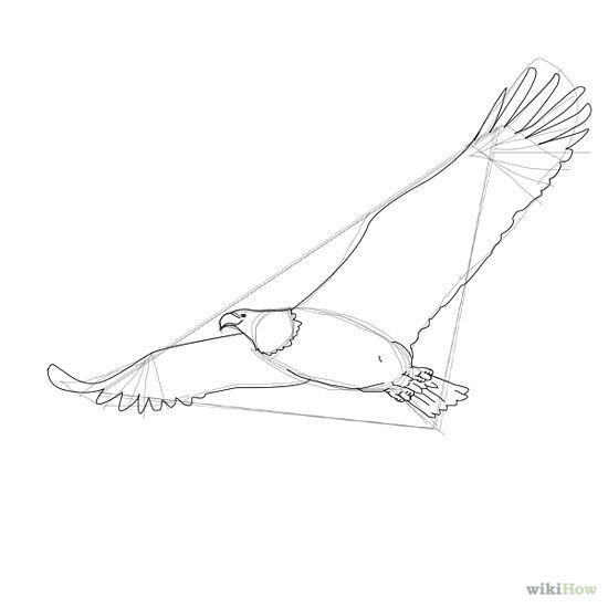 How to Draw a Bald Eagle: 6 Steps - wikiHow