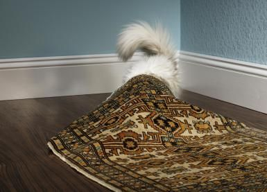 Most Effective Ways to Eliminate Pet Urine Odors