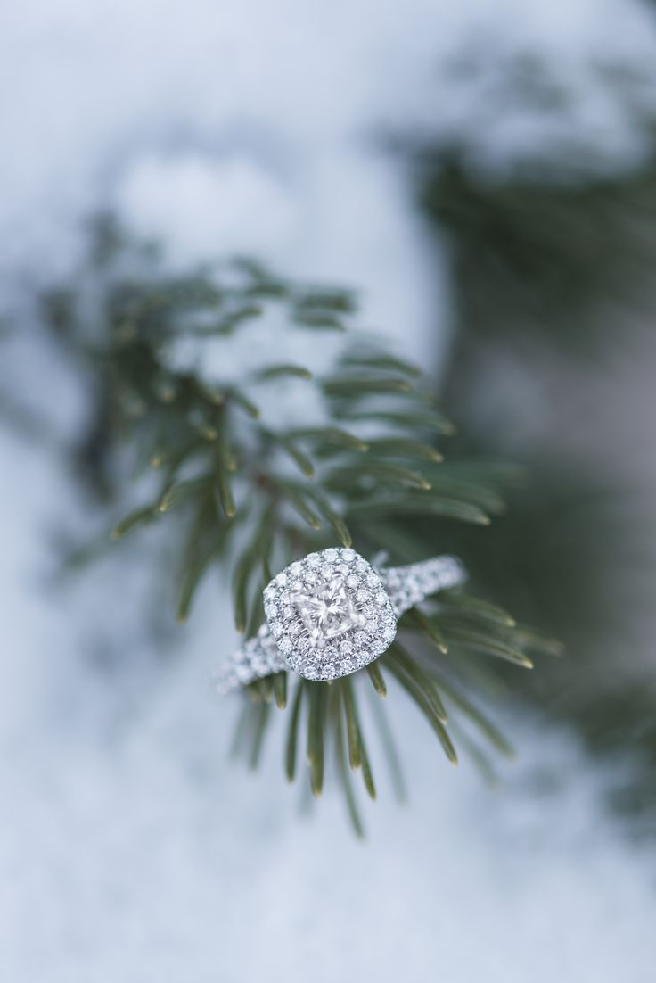 Gorgeous halo engagement ring sitting on pine tree in winter snow