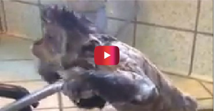 This video of a monkey showering will make you want to go out and buy a monkey | Rare