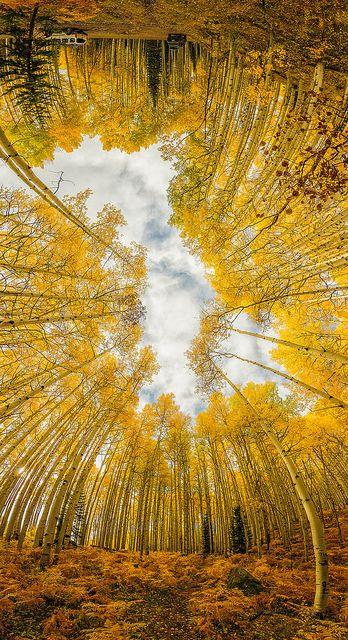 Mind Warp,Crested Butte, Colorado