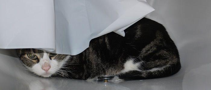 Er zijn helaas veel bange katten op de wereld. In dit blog tips hoe je een bange volwassen kat het beste kunt laten wennen.