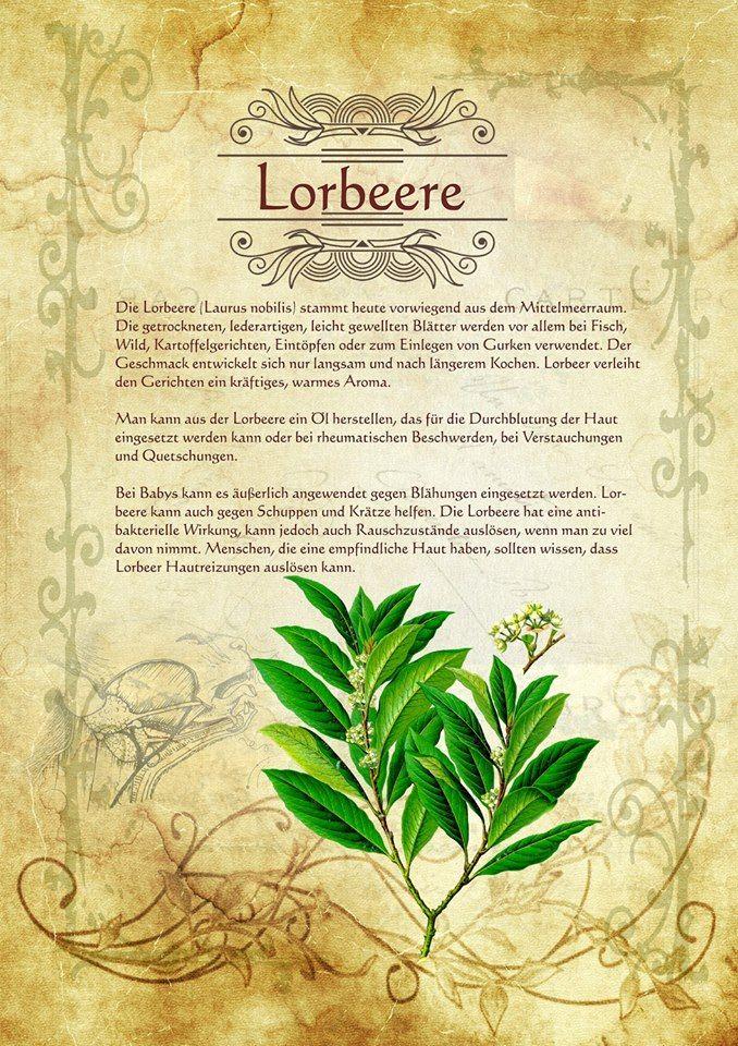 Lorbeere - Blätter eignen sich aber für Mixturen und Gebräue zur Wahrsagerei und Hellsicht. Lange Tradition bei der  Verwendung zur Fluchbannung, Umkehr und Schutz vor bösen Geistern und  Krankheiten.