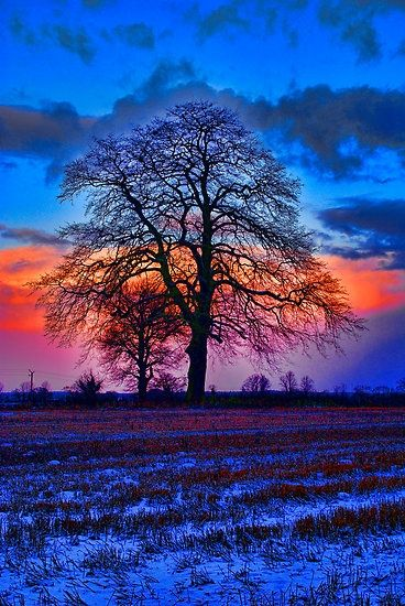 ✯ The Winter Tree at Sunrise