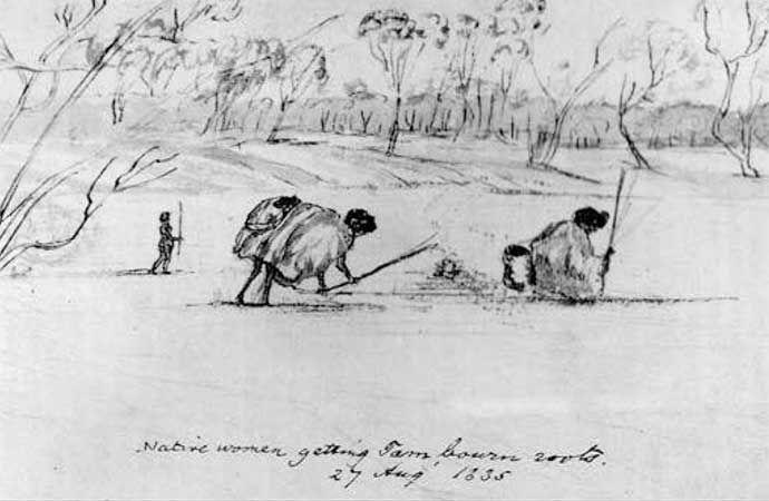 Yam Diggers 1835