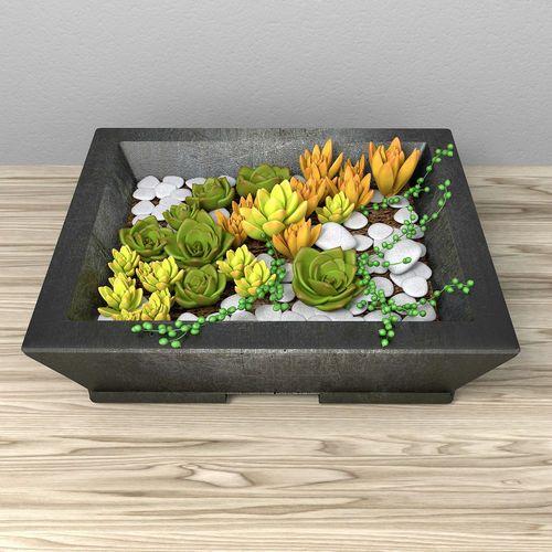Succulents Set - Sensecio and Sedum | 3D Model