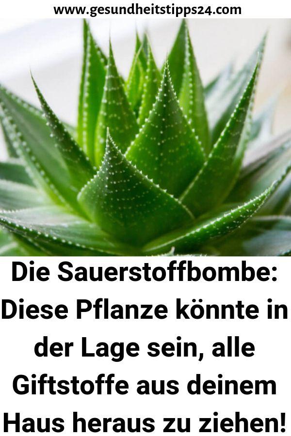 Die Sauerstoffbombe: Diese Pflanze könnte in der …