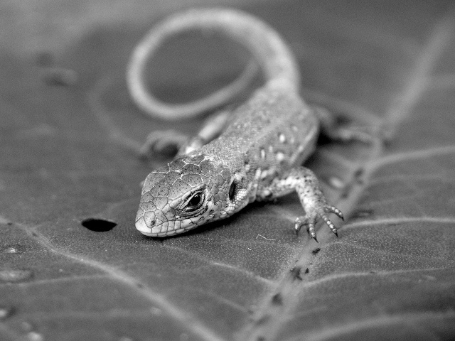 little friend again, via Flickr.