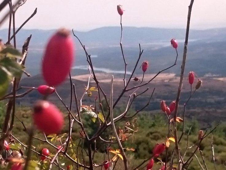 Alojamiento rural con encanto, hotel con encanto en la sierra, Alojamientos rurales en la Sierra de Madrileña, alojamiento con encanto cerca de Madrid,