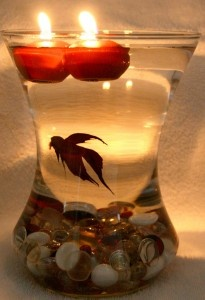 Beta Fish Bowl centerpieces - use floating tea light candles that do not drip wax!! --Super cool but the poor thing has no room to move :(